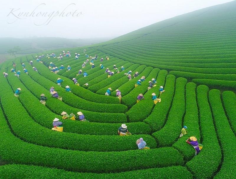 Sơn La: Lập phương án sử dụng đất các công ty nông, lâm nghiệp bàn giao về địa phương