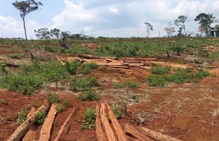 Đắk Nông: Bàn giao hơn 1.200 ha đất rừng cho Công ty Quảng Sơn